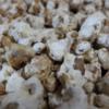 2018年、醤油作りの第一弾!長白菌で醤油を作ってみた。